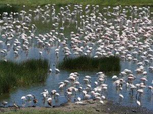 Arusha National Park - Kleingruppenreise Tansania