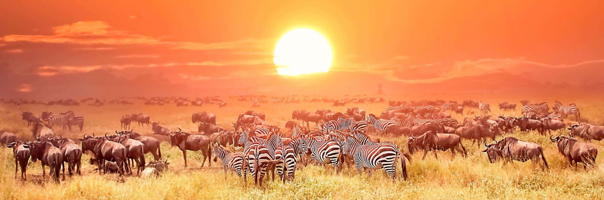 Safari Reise Tansania Sansibar