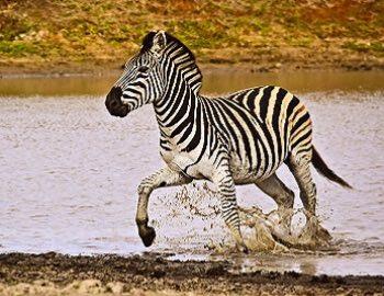 Safarireise begleitet Afrika
